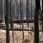 After the fire by kate18a