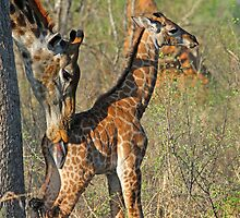 A mothers love up close! by jozi1