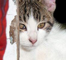Sweet Kitty by Carla Jensen