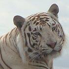 ROYAL WHITE TIGER by Ben Smith