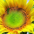 Sunny sunflower with Grasshopper by Virginia McGowan