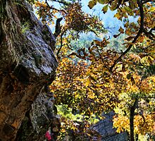 Fall Color At Robber's Cave by Carolyn  Fletcher