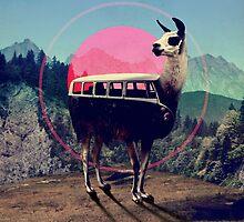 Llama by Ali Gulec