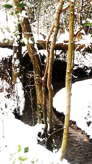 snowy winding brook by carolhynes