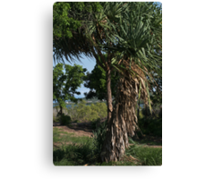Trees at the Bowen Rest Area Canvas Print