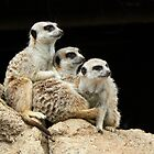 Meerkat Sentries Relaxing by Margaret Saheed