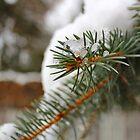 Snow pine by co0kiem0nster