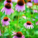 Bright Echinacea by Sunshinesmile83
