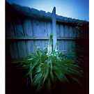 Backyard plant - pinhole by Malcolm Garth