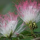 Pink and White Flowers by STHogan