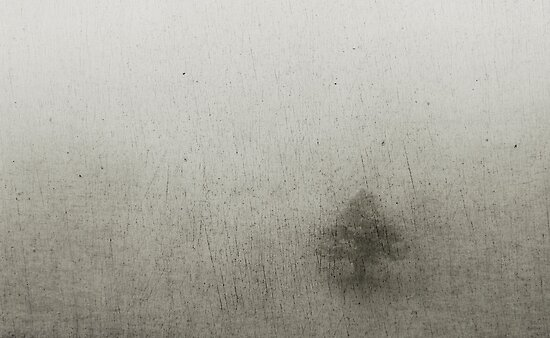 a lone tree on a foggy mountain top by Clare Colins