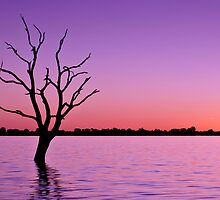 Sunset at Lake Bonney by Glen  Cooper