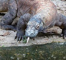 Komodo dragon by supergold
