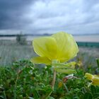 Kirra Beach Poppy - Coolangatta AUS by johnsonwaters