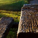 Weathered bench by Mark Williams