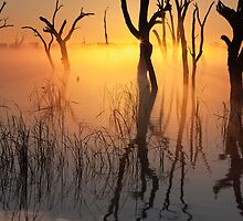 First Rays - Lake Mulwala by Hans Kawitzki