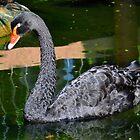 The Black Swan - Singapore. by Ralph de Zilva