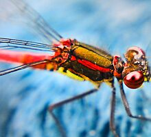 Bug-eyed by missmoneypenny
