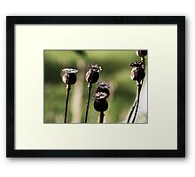 Poppy Shells Framed Print
