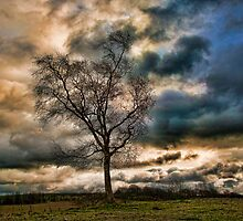 Lonely Birch by Dave Godden
