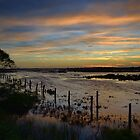 Wetlands Sunrise by Robyn Forbes