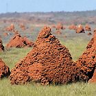 Termite Hills by Robyn Forbes