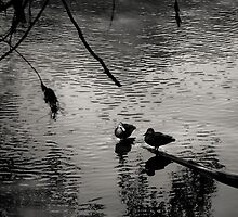 Two Birds by Christine  Wilson Photography