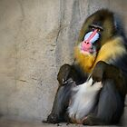 Mandrill  by Saija  Lehtonen