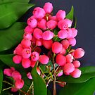 Pink Berries by ange2