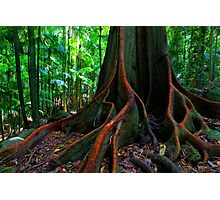 The Forest Giant Photographic Print