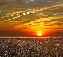 Sunrise over seedheads by Geoff Carpenter