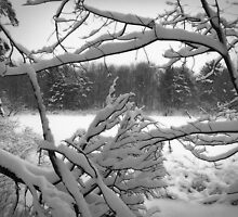 Snowbound Pond by Kathilee