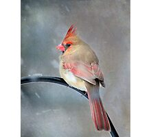 A Wee Bird ~ For Mike Oxley Photographic Print