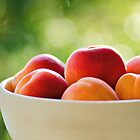 Apricots.. by Michelle McMahon