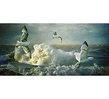Herring Gulls on The Mersey Photographic Print