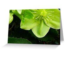 Winter Bloomer Greeting Card