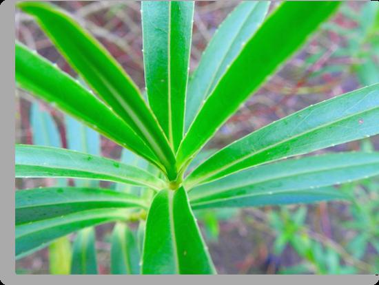 Green Leaf by Johnathan Bellamy
