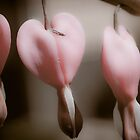 Hearts O' Plenty by KSKphotography