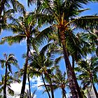 Palms of Waikiki by Stephen  Saysell