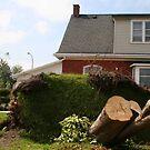 2011 08 21 Goderich, Ont. Tornado One Week Later Aftermath 6689 by Daniela Weil