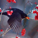 Black Bird in Flight by Jerry L. Barrett
