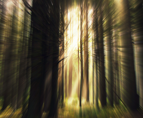 RUN... Don't Look Back.....forest, Yachats, Oregon by trueblvr