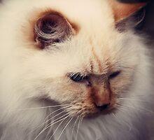 Princess Cat by LoveSMP