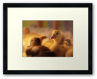 Little Quacker by Lori Deiter