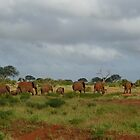 Herd of Red African Elephants, Kenya, Africa by Anita  Fletcher