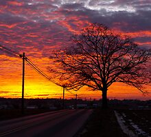 Peace Road at Sunset by Mark Van Scyoc