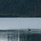 Lake Tikitapo (Blue Lake) by Ommik