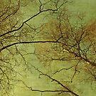 Nature's veins by Anne Staub