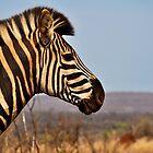 Zebra by Emma  Gilette