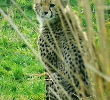 Hide and Seek!! Cheetah Cub by Michaela1991